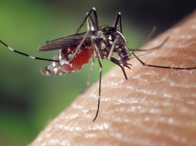 mosquito biting skin in high point mosquito control