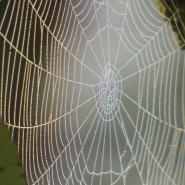 Spider web outside with dew