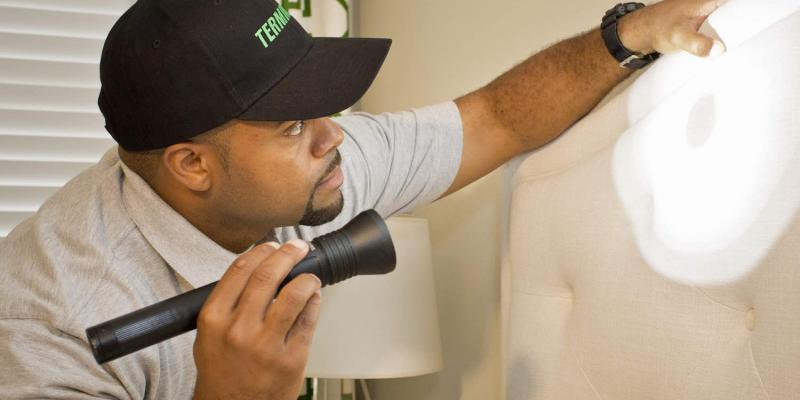 terminix exterminator inspecting for bed bugs with flashlight