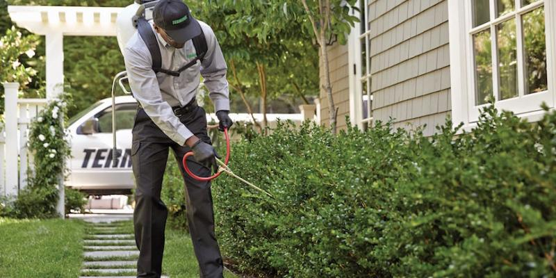 terminix exterminator spraying bushes for mosquitoes